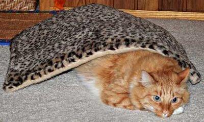 Bob in a Blanket