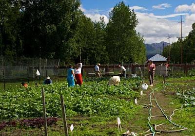 Working Garden