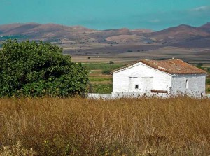 Wild Fig Tree & Church in Greek Countryside