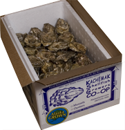 Fresh Oysters from Kachemak Shellfish Growers' Co-op
