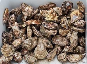 Fresh Raw Alaska Oysters