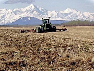 Plowing Barley Field, Delta Junction, Alaska