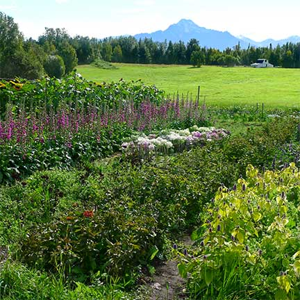 Earthworks Farm, Palmer, Alaska 2012