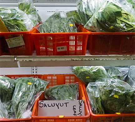 APA Market Greens