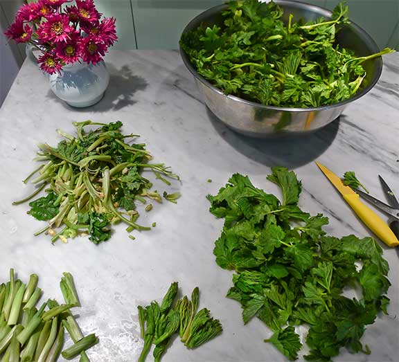 Breaking Down Cow Parsnips. Clockwise from flowers: Whole cow parsnip shoots, leaves only, base of stems only, debris from cleaning cow parships. Photograph by Laurie Constantino.