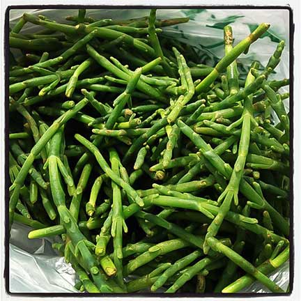 Juicy Salty Crunchy: Samphire, A Delicious Wild Edible