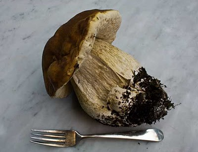 How to Gather and Use Alaska's Wild Mushrooms
